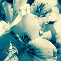 Blue Summer Flower by Vanessa Yi-Kai Tsai