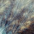 Blue Supernova - Hoarfrost by Kim Bemis