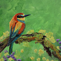Blue Tailed Bee Eater by Laura Wilson