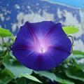 Blue Teefull by Jim Beer