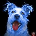 Blue Terrier Mix 2989 - Bb by James Ahn