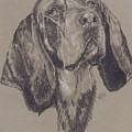 Blue Tick Coonhound by Barbara Keith