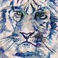 Blue Tiger by Jamey Balester