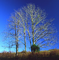 Blue Tree In Tennessee by Randy Oberg
