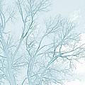 Blue Trees by Jen Olson