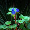 Blue Trio by Daniel Dean