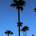 Blue Tropical Night Panorama by James BO Insogna