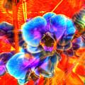 Blue Velvet Orchids by Stephen Settles