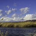 Blue Waters Of The Marsh by Doug Daniels