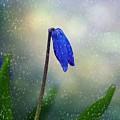 Blue Wild Flower by FL collection
