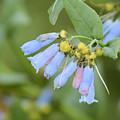 Blue Wild Flower by Wendy Fox