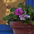 Blue Window With Geraniums by TouTouke A Y