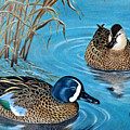 Blue-winged Teals by Elaine Booth-Kallweit