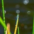 Blue Wings by Stephen Whalen