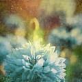 Blue Yonder by Debra Cox