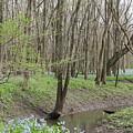Bluebell Spring Creek by Dylan Punke