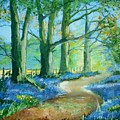 Bluebell Walk by Angie Wright