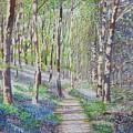 Bluebell Walk At Llanilar Aberystwyth by Edward McNaught-Davis