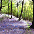 Bluebell Wood by Paul Dene Marlor