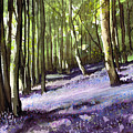 Bluebells At Grimescar Wood by Paul Dene Marlor