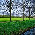 Bluebells In England by Nick Wardekker