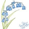 Bluebells by Sara Alhajeri