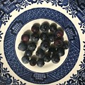 Blueberries On Blue And White Plate  by Robin Maria Pedrero