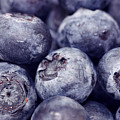 Blueberry Macro by Kitty Ellis