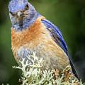 Bluebird Attitude by Jean Noren