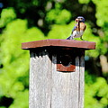 Bluebird Breakfast Options by Allen Nice-Webb