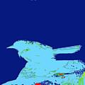 Bluebird by Chris  Taggart
