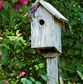 Bluebird Haven by Suzanne Gaff