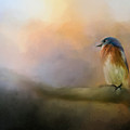 Bluebird In The Perfect Light by Jai Johnson