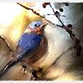 Bluebird by Ken Barker