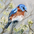 Bluebird On Dogwood by Donna Tuten