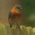 Bluebird Perch  by Ola Allen