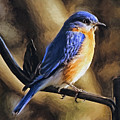 Bluebird Portrait by Sue Melvin