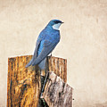 Bluebird Post by James BO Insogna