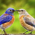 Bluebird Romance by Jean Noren