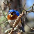 Bluebird Temper by Dianne Cowen