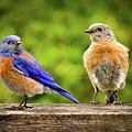 Bluebirds by Jean Noren