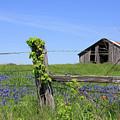 Bluebonnet Barn by Jerry Bunger