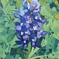 Bluebonnet by Jim Bob Swafford