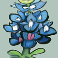 Bluebonnet by Kevin Middleton