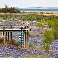 Bluebonnet Lakeshore by Gary Holmes
