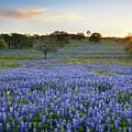 Bluebonnet Sunrise And A Windmill In Texas 1 by Rob Greebon