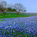 Bluebonnet Vista - Texas Bluebonnet Wildflowers Landscape Flowers  by Jon Holiday
