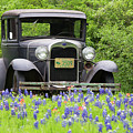 Bluebonnets And Fords by Austin Photography