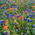 Bluebonnets And Paintbrushes 3 - Texas by Brian Harig