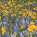 Bluebonnets And Wildflowers by Darla Rae Norwood